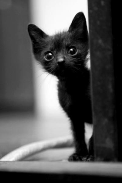 черный тощий кот