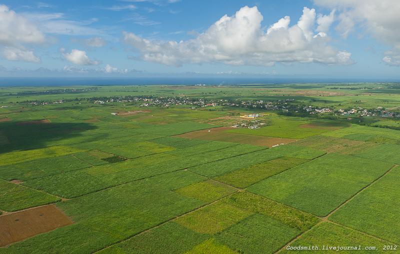 Плантации сахарного тростника