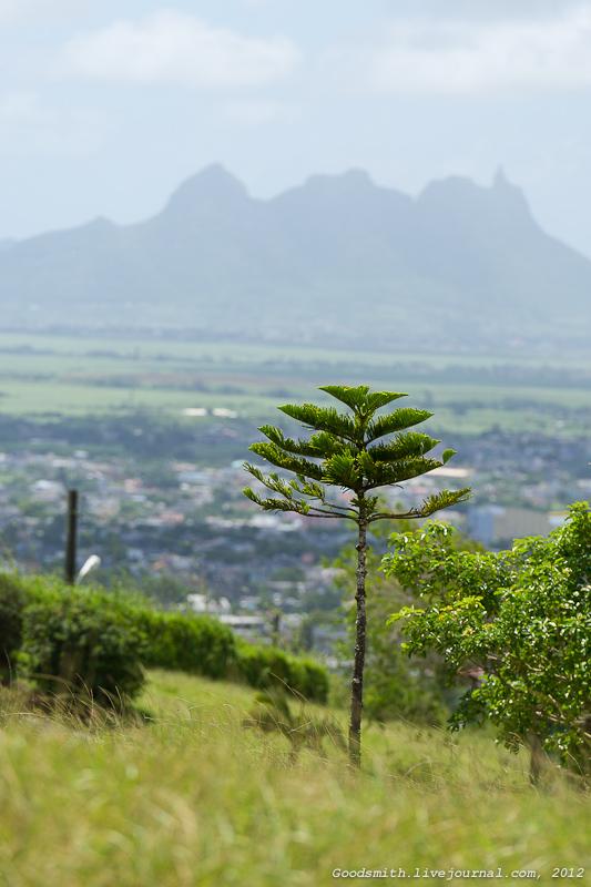 Какая-то елка рядом с кратером на фоне какой-то горы вдалеке