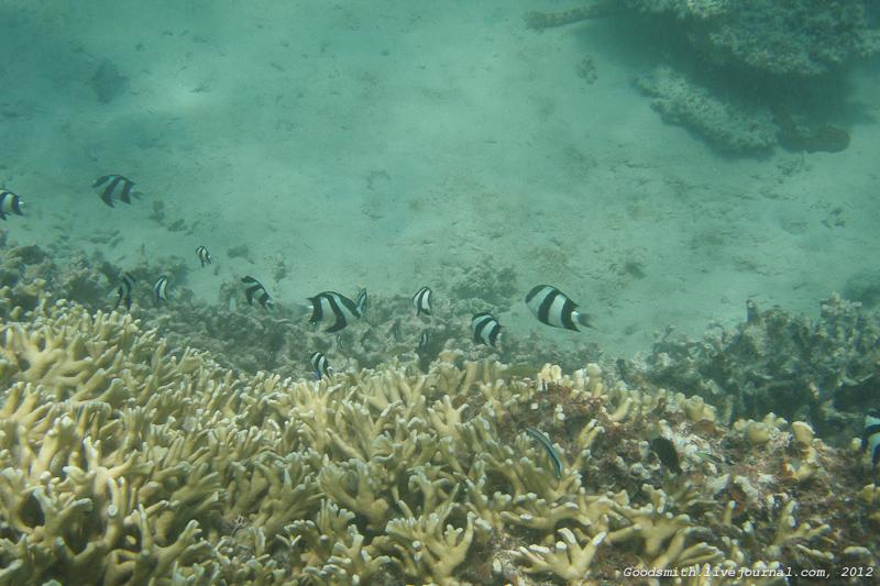 Кораллы и полосатые рыбки
