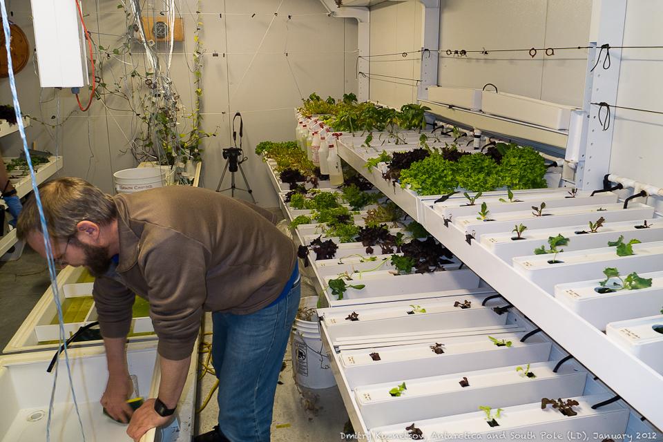 Полярной зимой растений больше
