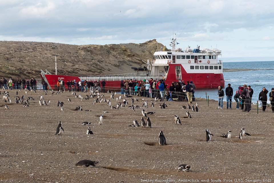 Пингвины и люди