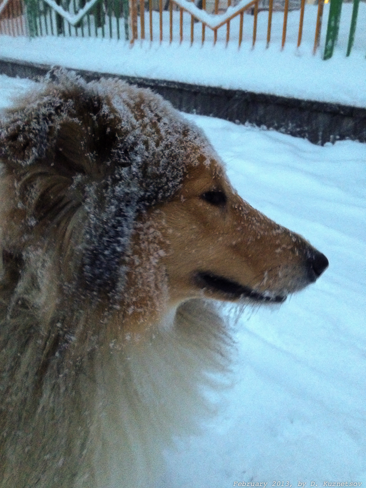 А в это время в Москве шел снег, пробки и Сеня гулять
