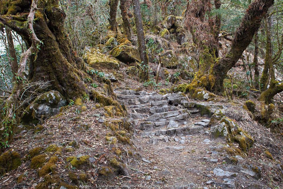 Непал - ступеньки в лесу