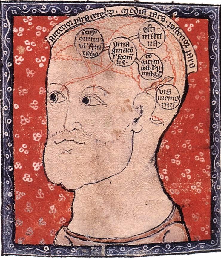 Anatomy of Brain - Medieval diagram
