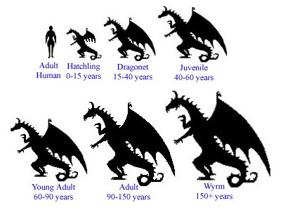 The growing period of a dragon