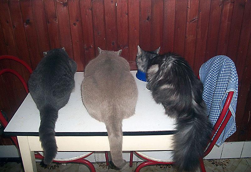3-cats-asses-4LJ