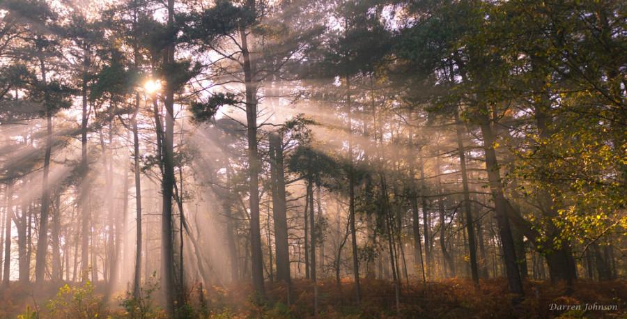 Синдром Сезонного Аффективного Расстройства фото