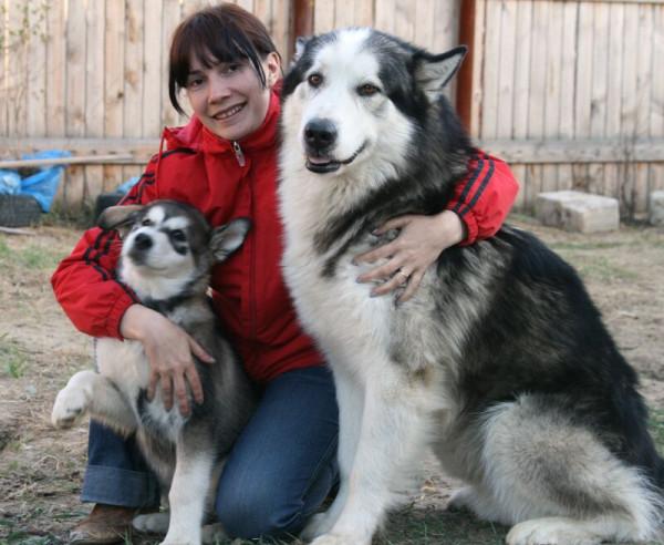 Самые большие аляскинские маламуты