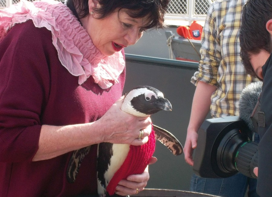 Pinguin-Pullis_03_neu