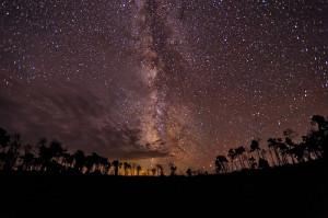 4876549905_0e08202ce0.Млечный Путь над лесом_Fort Photo