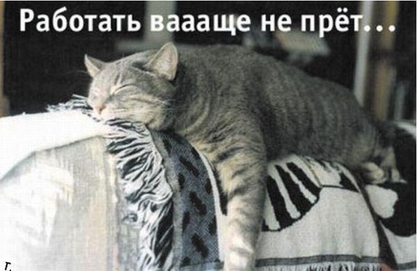 1354480105_ponedelnik_42
