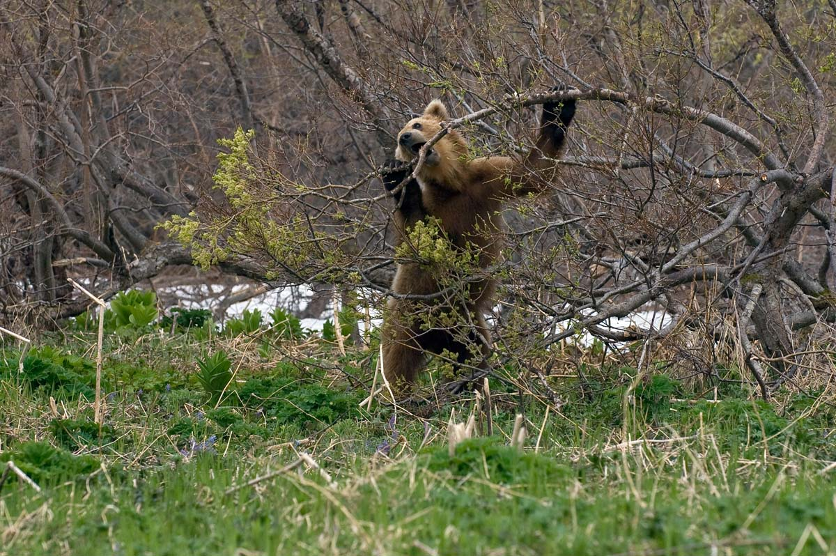 Дикие животные ранней весной картинки