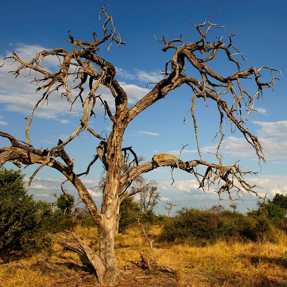 Botswana_0874