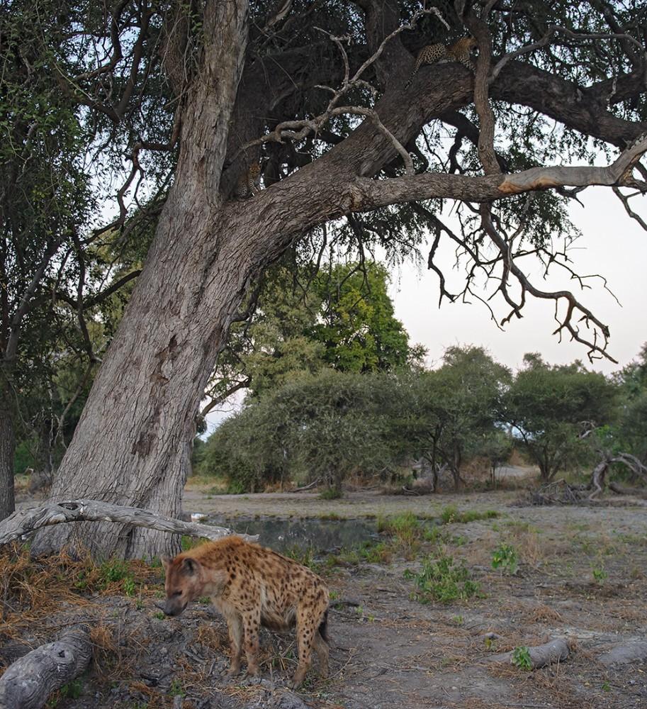 Botswana_3338