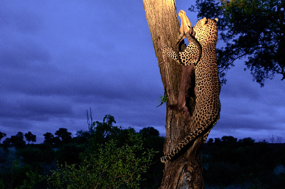 Leopard_0820