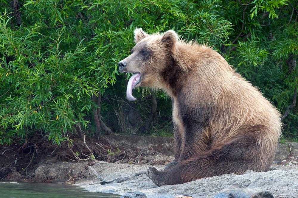 Bear_04486