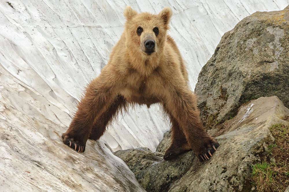 Bear_00619