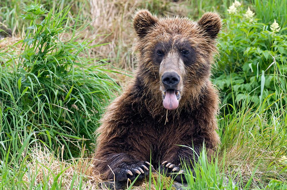 Bear_01104