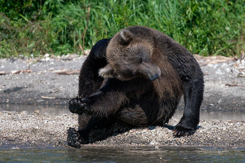 Bear_01515