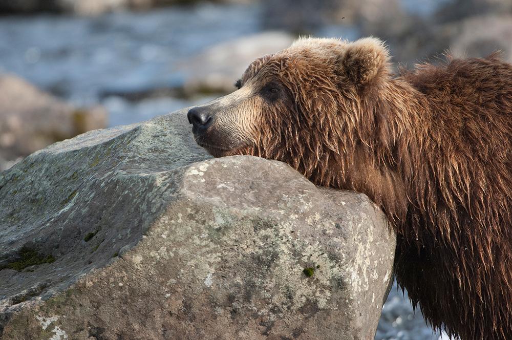 Bear_02077