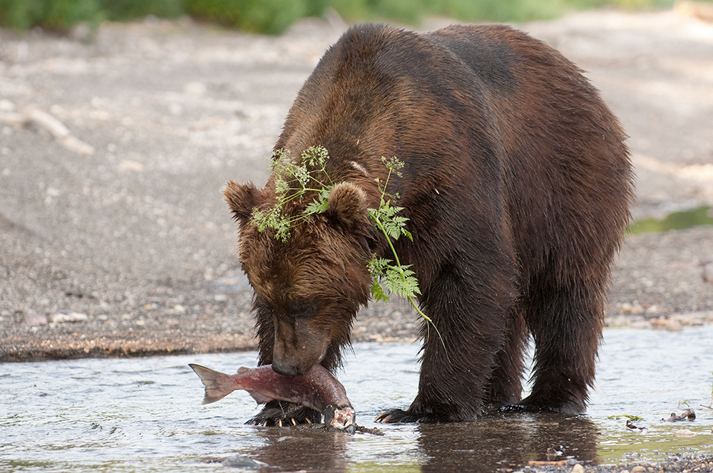 Bear_02233