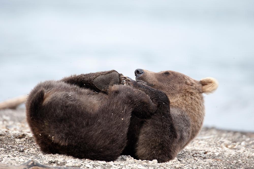 Bear_02921