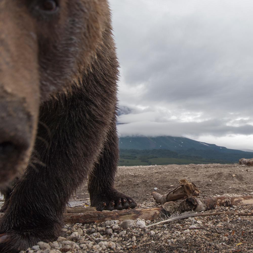 Bear_03295