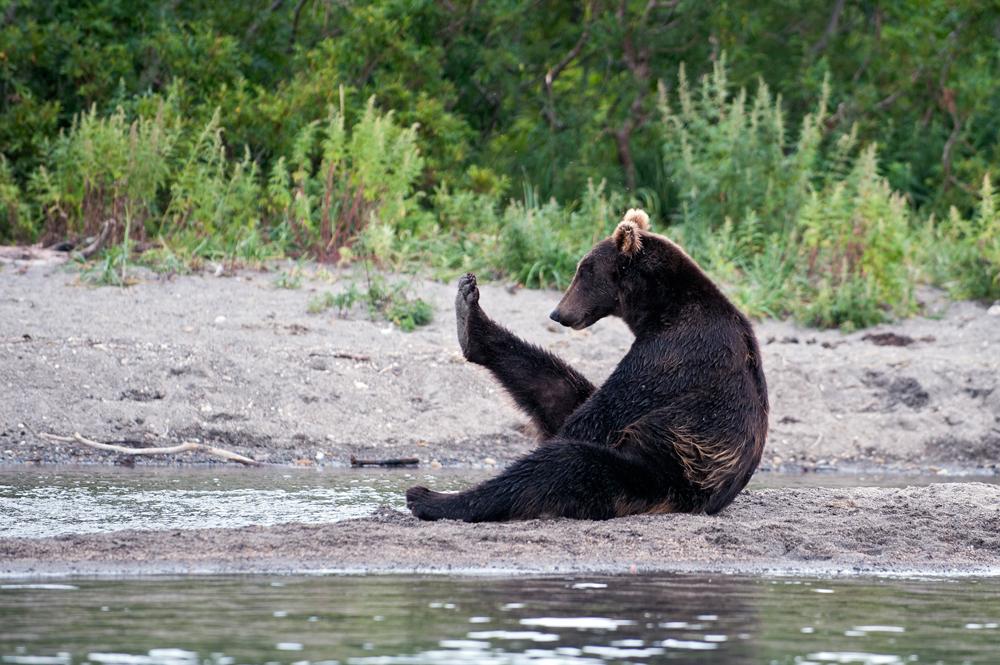 Bear_03581