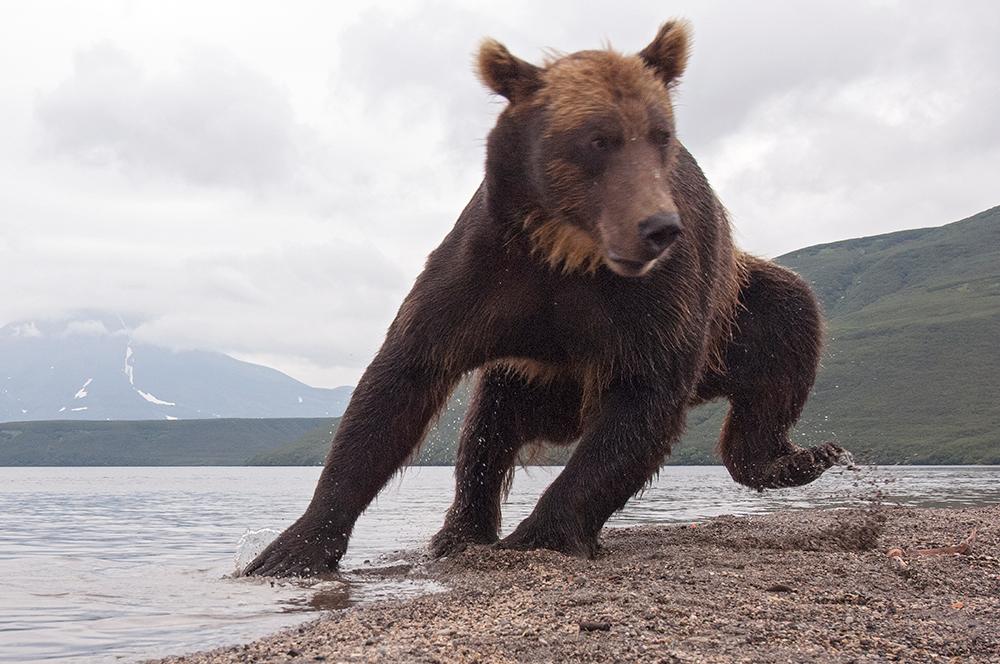 Bear_03622