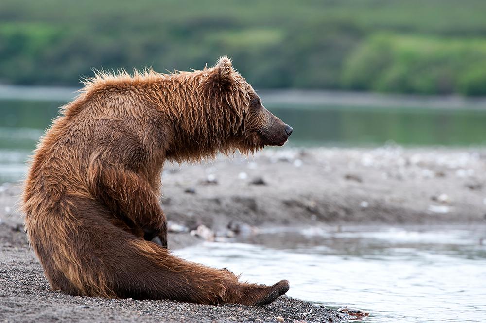Bear_04315