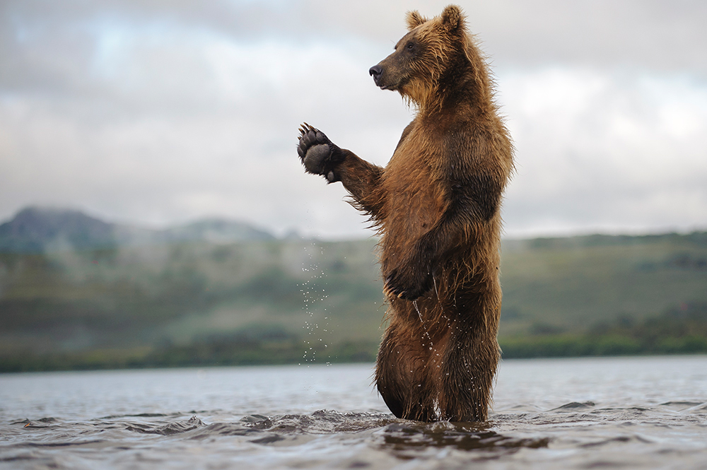 Bear_04470