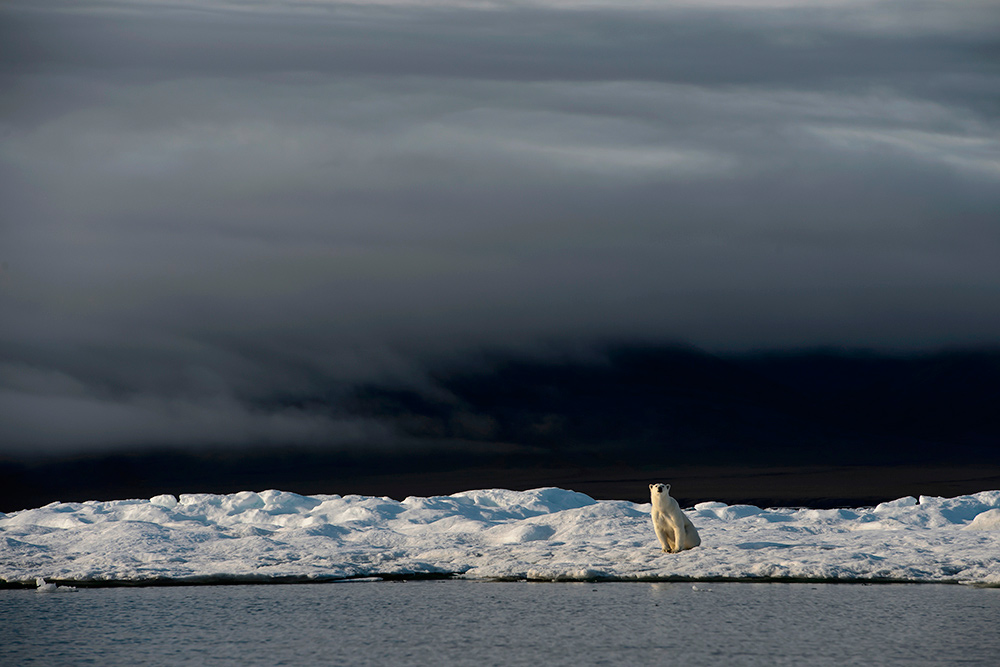 Wrangel-island_16722