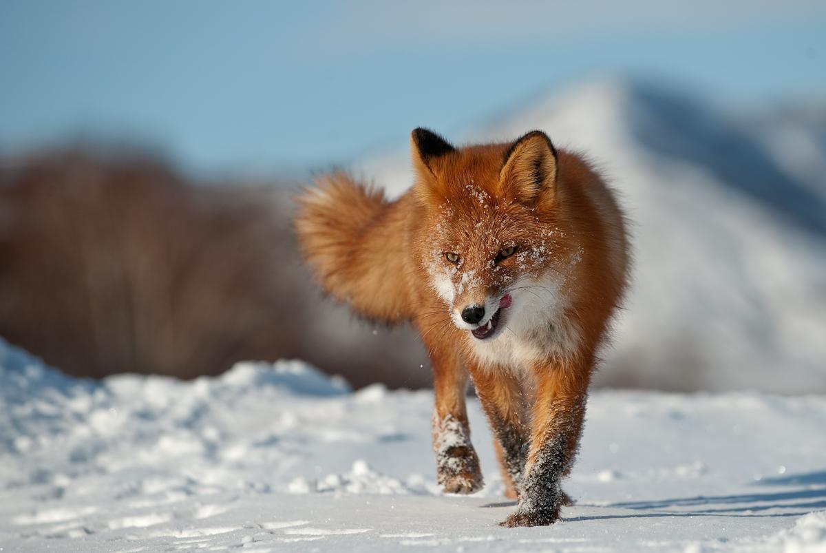 Зимой многие звери выглядят просто
