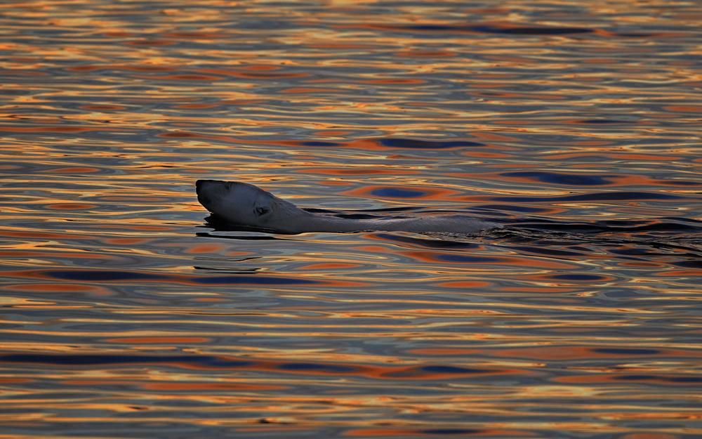 Wrangel-island_12945