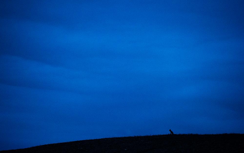 Wrangel-island_0854