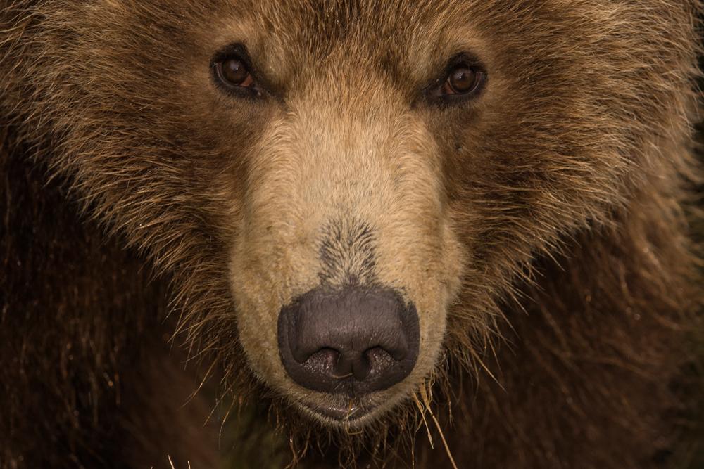 Bear_00179