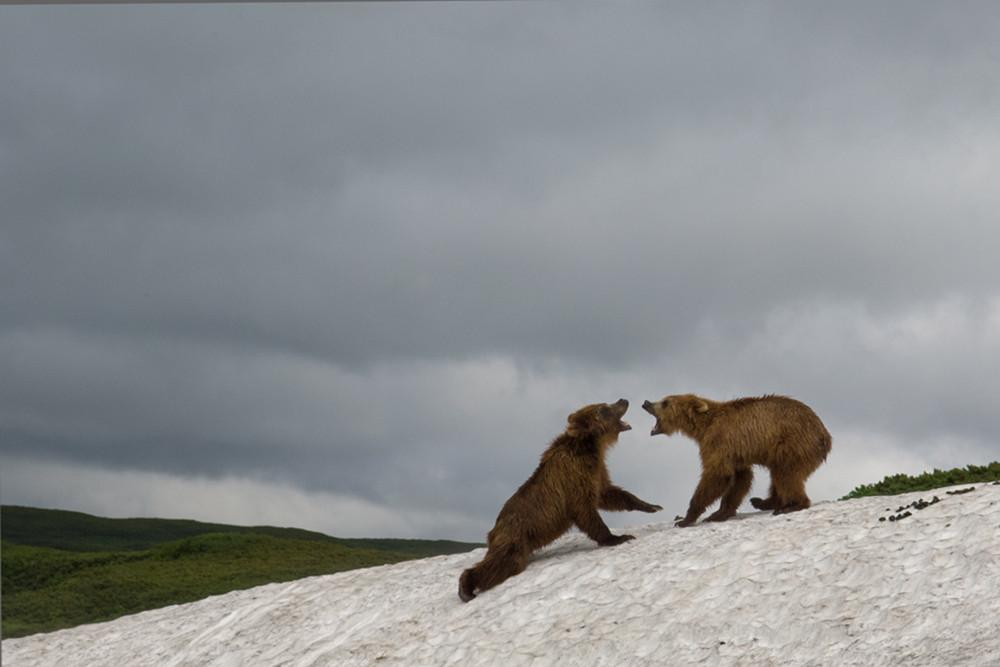 Bear_01053