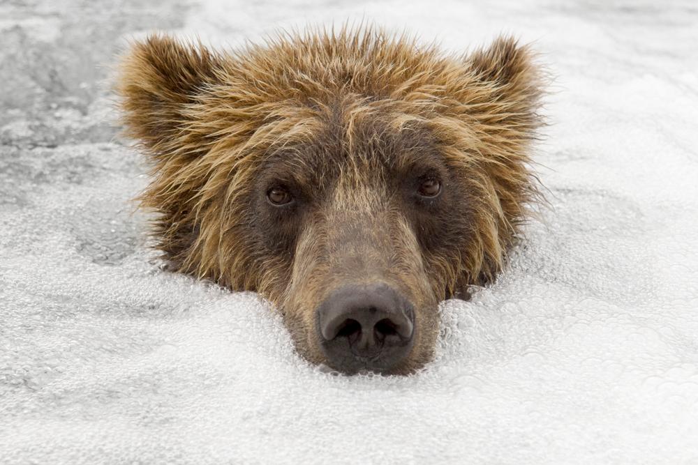 Bear_01117