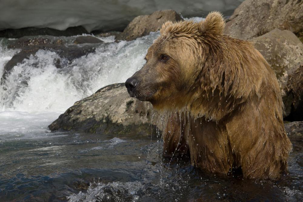 Bear_01220