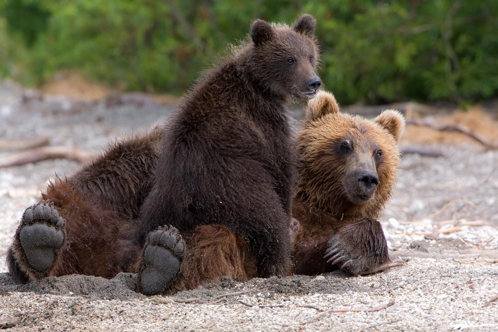 Bear_01782