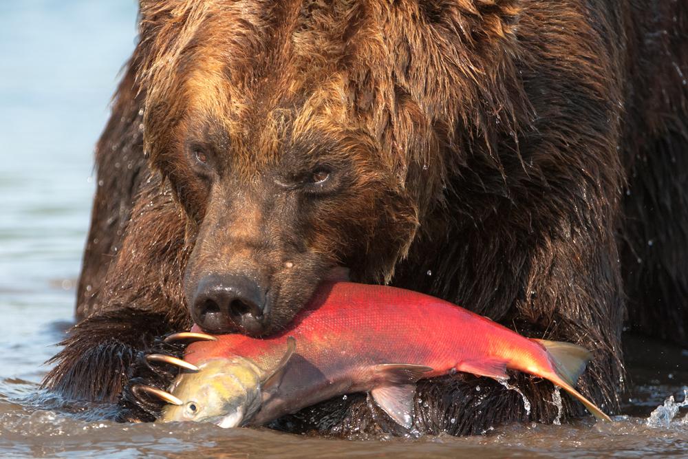 Bear_02244