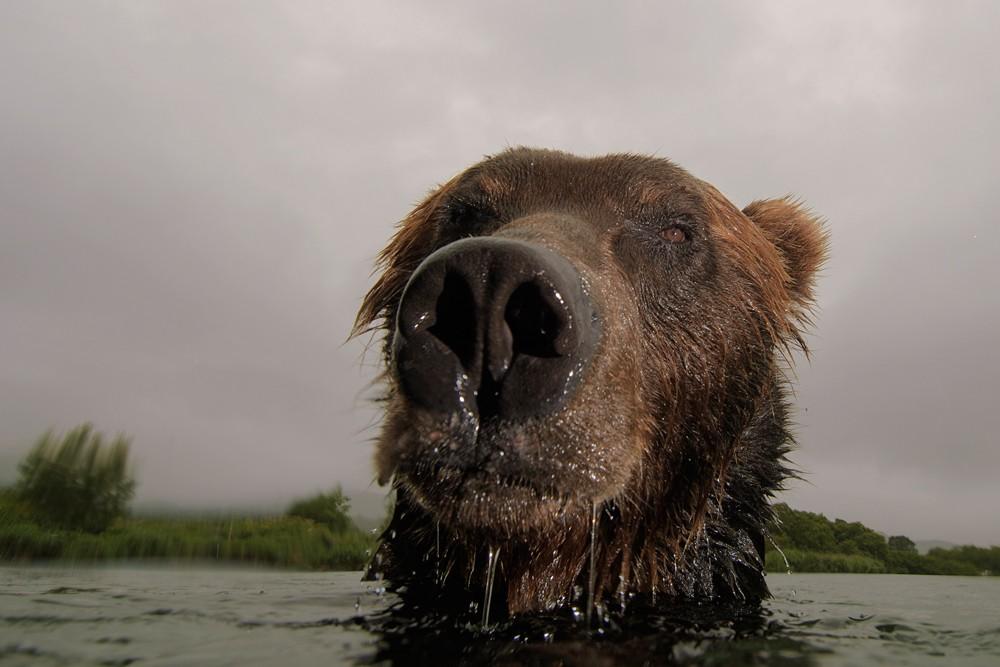 Bear_02342