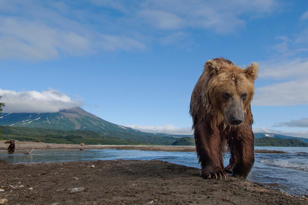 Bear_03108