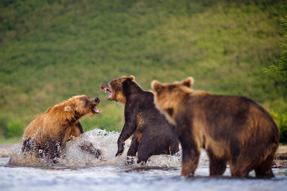 Bear_04465