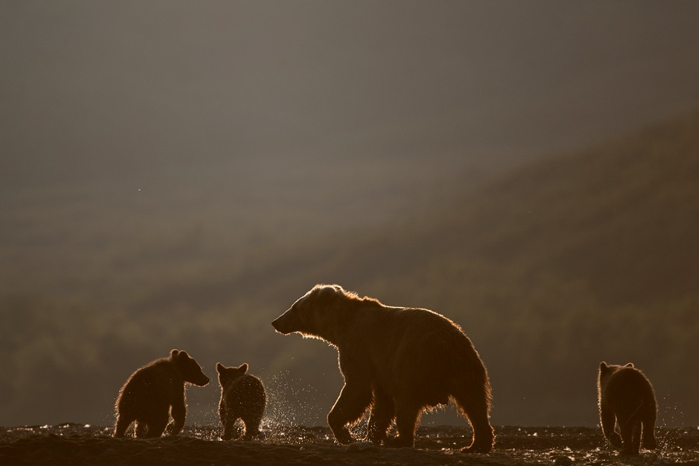 Bear_04751