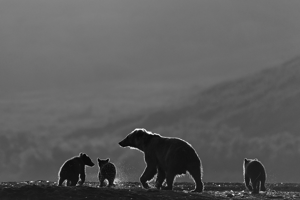 Black-and-White_The-family-of-the-bears