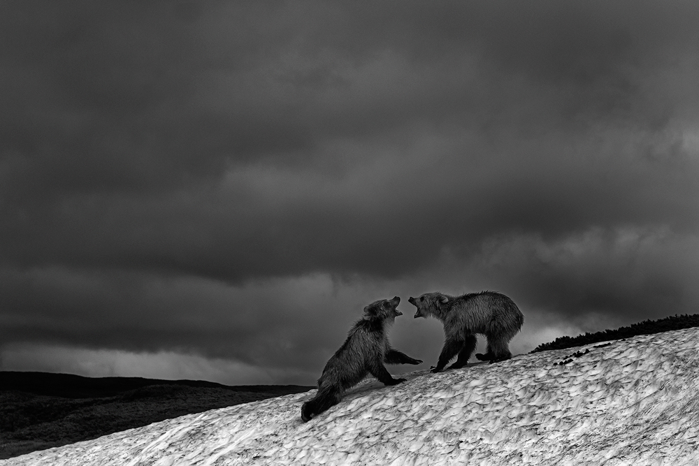 Black-and-White_Two-bears