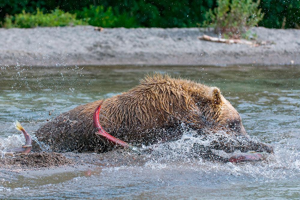 Bear_01598