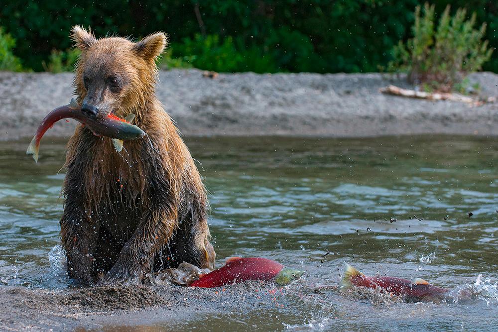 Bear_01602